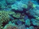 Arrecifes de coral (I)