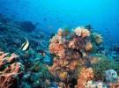 Arrecifes de coral (II)