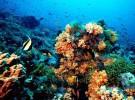En este siglo desaparecerían los arrecifes de coral