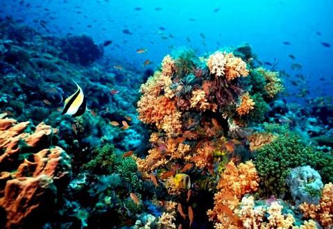 arrecifedecoral.jpg