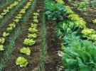 Carbón vegetal contra el cambio climático