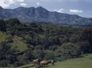 Costa Rica, el primer país en producción neutro de CO2