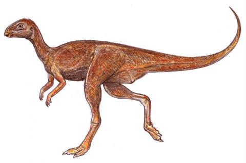 gaspanisaura