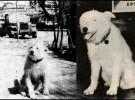 Fernando, el perro de las tres esculturas