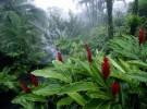 Costa Rica, el paraíso terrenal