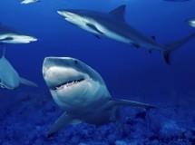 Animales asesinos: el tiburón blanco, puesto 10