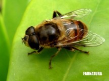 Animales asesinos: las abejas, puesto 3