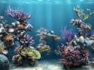 ¿Esperanza para los arrecifes de coral?