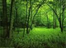 Los bosques que plantamos