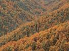 Cómo son los bosques