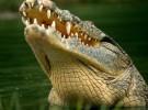 Animales asesinos: los cocodrilos, puesto 4