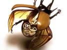 Escarabajos cyborg