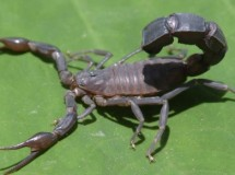 Animales asesinos: los escorpiones, puesto 5