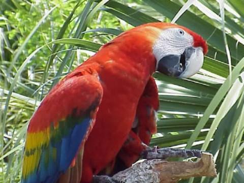 Nuevos papagayos en Loro Parque Fundación