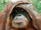 Es desesperante la situación de las selvas de Borneo y Sumatra