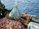 Europa suspende en cuanto a pesca sostenible