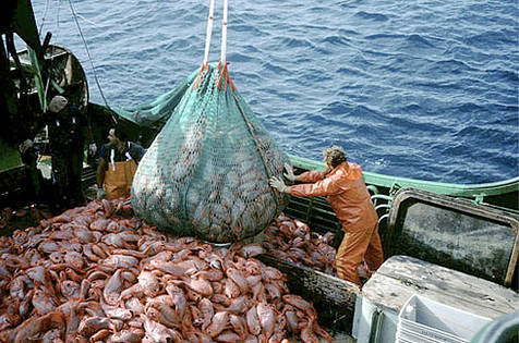 pesca_sostenible