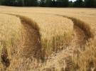 Nuevo planteamiento a la producción alimenticia en Reino Unido