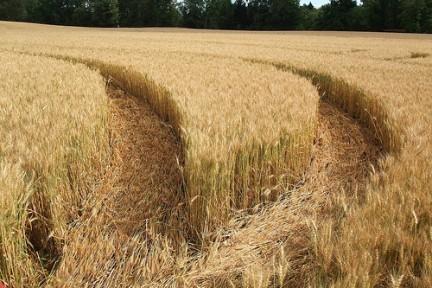 agriculturareinounido