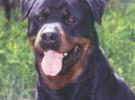 Los perros agresivos son maleducados, parte 2