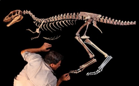 Tiranosaurio Rex: descubren a su mini abuelo