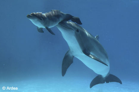 baby_dolphin