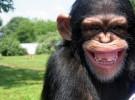 Inteligencia animal