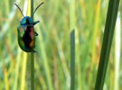La plaga de los escarabajos en Estados Unidos