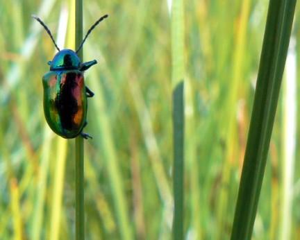 escarabajosenaccion