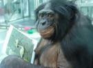 Inteligencia animal (II)