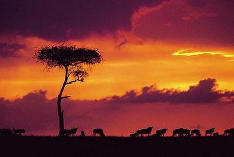 Kenia: se atraviesan momentos de tensión en materia ambiental