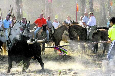 Festejos taurinos ¿maltrato o diversión?