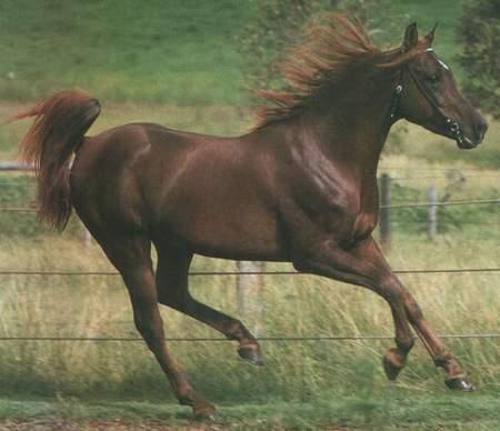 Los caballos (III)