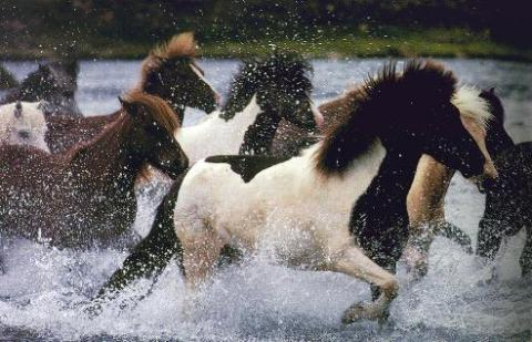 Los caballos (II)