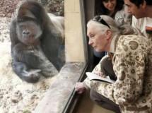 Jane Goodall al rescate de los animales en Bolivia