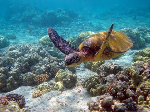 Suzie la tortuga viajera