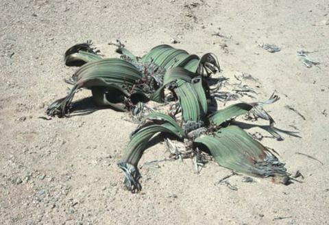 vegetacion desierto