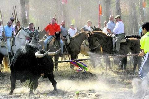 Facultad desaprueba crueldad animal con los toros