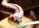 Insuficientes antídotos para tantas serpientes y la indiferencia del «mundo civilizado»