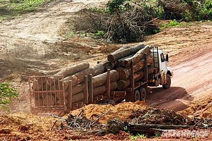 No más madera ilegal