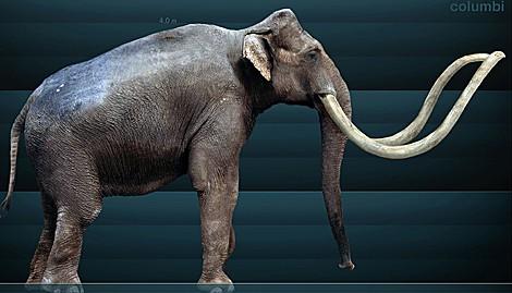 Restos de una mamut descubiertos por las lluvias en México
