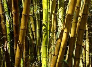 306_bolk_bambu.jpg