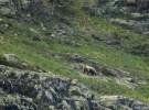 Dos osos pardo más en el Val d'Aran