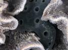 ¿Nació el cáncer en las esponjas marinas?