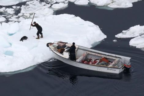 caza_focas