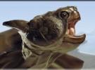 La extinción de tortugas gigantes fue causa de los humanos