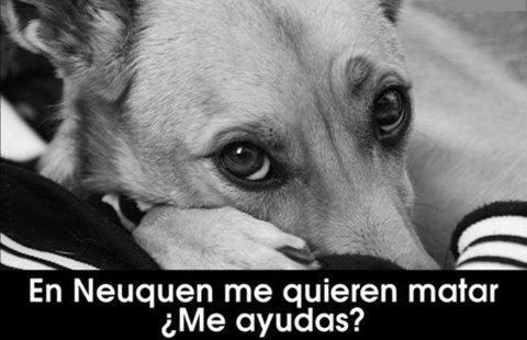 Matanza de perros en Neuquen, Argentina