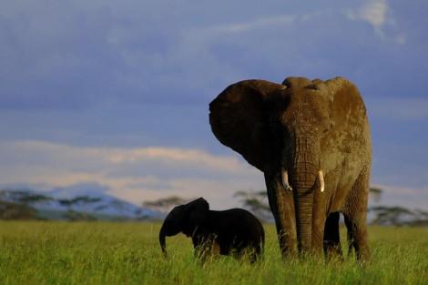 elefantes-africa