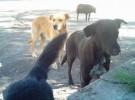 Perros más grandes, perros más inteligentes