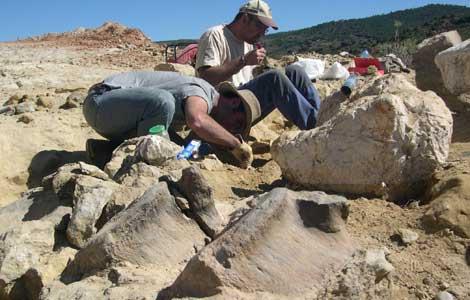 femur-dinosaurio-dosmetros-riodeva